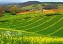 paysage de France : dessins géométriques des champs