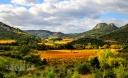 Vignoble à l'automne, paysage de France