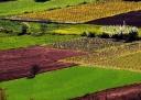 Géométrie agricole, dessin des champs, paysage de France